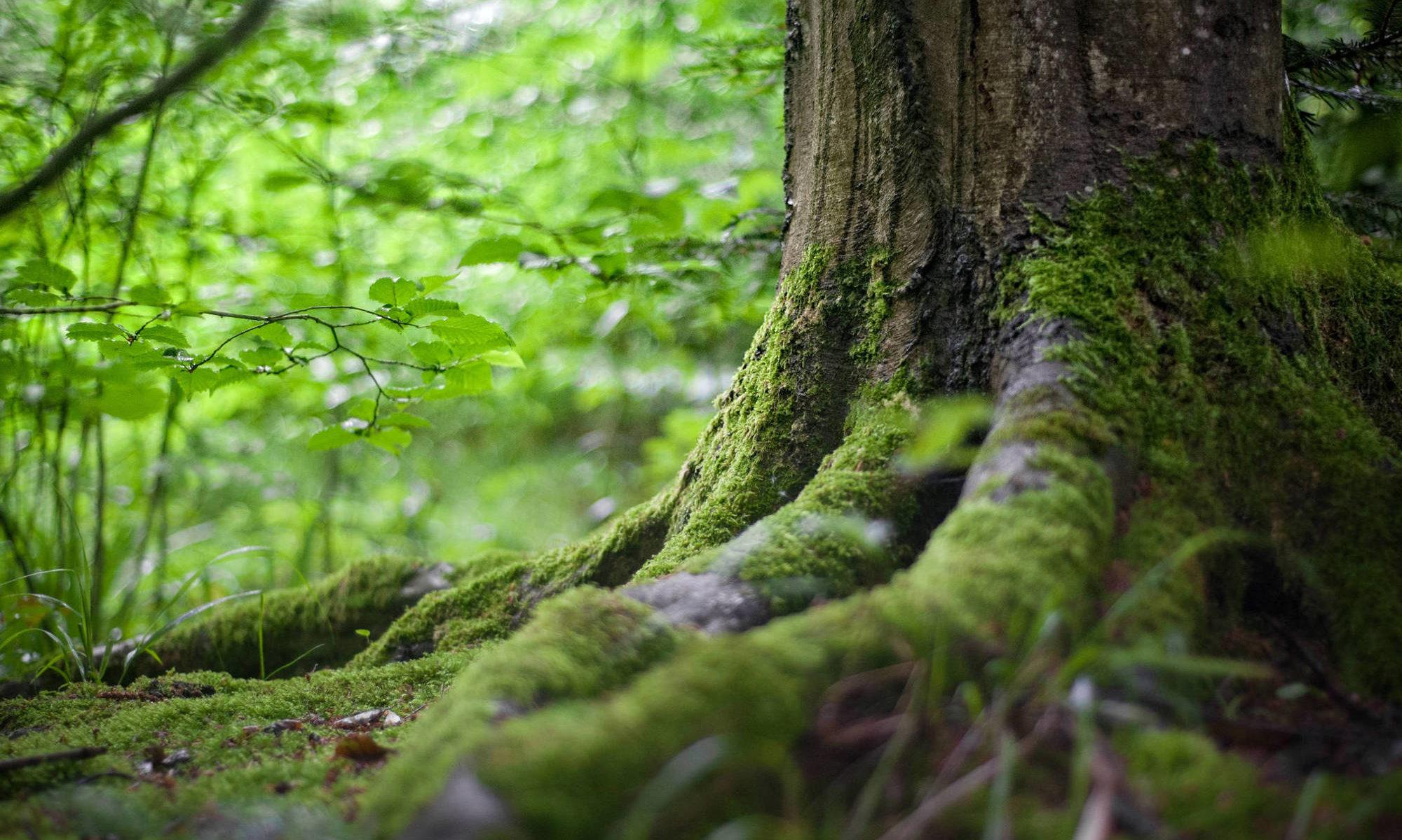 Über mich - Foto von Baum/Ressourcen